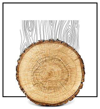 Profumi di nicchia - legnosi